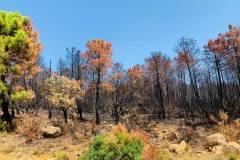 Wälder im Gouvernorat Jendouba 2021