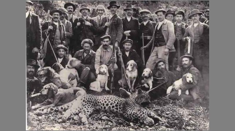 Bild: Letzter, im Jahr 1929 getöteter Atlasleopard