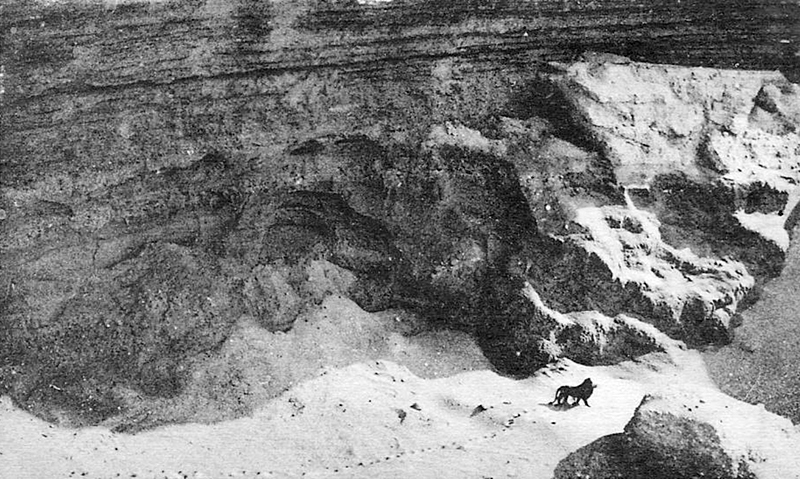 Letztes bekanntes Bild eines freilebenden Berberlöwen, aufgenommen um 1925