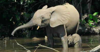 Der Elefant lebte bis 600 n. Chr. in Tunesien