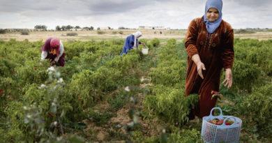 Landarbeiterinnen in Tunesien