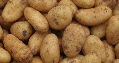 Tunesien: Anstieg bei der Produktion saisonaler Kartoffeln bis August 2018