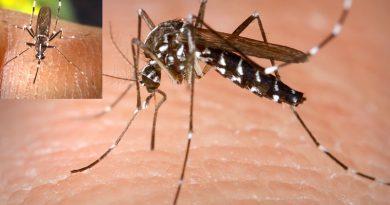 West-Nil-Fieber in Tunesien – Wie gefährlich ist der West-Nil-Virus?