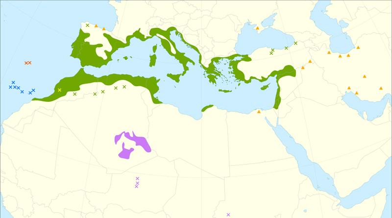 Verbreitung des Olivenbaums - Grafik: Giovanni Caudullo - Caudullo, G., Welk, E., San-Miguel-Ayanz, J., 2017. Chorological maps for the main European woody species. Data in Brief 12, 662-666. DOI: 10.1016/j.dib.2017.05.007Data: https://doi.org/10.6084/m9.figshare.5110762References:Anthelme, F., Abdoulkader, A., Besnard, G., 2008. Distribution, shape and clonal growth of the rare endemic tree Olea europaea subsp. laperrinei (Oleaceae) in the Saharan mountains of Niger. Plant Ecology 198(1): 73-87.Babac, M. T., Uslu, E., Bakis, Y. TÜBİVES - Turkish Plants Data Service. Accessed in August 2016.Bohn, U., Gollub, G., Hettwer, C., Weber, H., Neuhäuslová, Z., Raus, T., Schlüter, H., 2000. Karte der natürlichen Vegetation Europas; Map of the Natural Vegetation of Europe. Landwirtschaftsverlag. ISBN 9783784338095Danin, A. Flora of Israel Online. Jerusalem Botanic Garden. Accessed in August 2016.GBIF.org, 2016. Banco de Datos de la Biodiversidad de la Comunitat Valenciana. DOI: 10.15468/dl.iru4gqGBIF.org, 2016. Cartografía de vegetación a escala de detalle 1:10.000 de la masa forestal de Andalucía. DOI: 10.15468/dl.v7k8vyGBIF.org, 2016. FloraCAT: Banco de datos de los cormófitos de Cataluña. DOI: 10.15468/dl.biuda7GBIF.org, 2016. Fundación Biodiversidad, Real Jardín Botánico (CSIC): Anthos. Sistema de Información de las plantas de España. DOI: 10.15468/dl.9uo7isGBIF.org, 2016. INPN - Données flore des CBN agrégées par la FCBN. DOI: 10.15468/dl.gkp7wmGBIF.org, 2016. Israel Nature and Parks Authority. DOI: 10.15468/dl.yaszkmGBIF.org, 2016. Karl Franzens University of Graz, Insitute for Botany - Herbarium GZU. DOI: 10.15468/dl.4ok78iGBIF.org, 2016. Sistema de Información de la vegetación Ibérica y Macaronésica. DOI: 10.15468/dl.m8zdd8Médail F., Quézel P., Besnard, G., Khadari, B. 2001. Systematics, ecology and phylogeographic significance of Olea europaea L. ssp. maroccana (Greuter & Burdet) P. Vargas et al., a relictual olive tree in south‐west Morocco. Botanical Journal of the