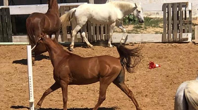 Bahya Ranch Kalaa Kébira - Adresse: R'mila, Kalâa Kebira, Telefon: 98 400 626