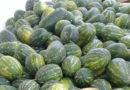 Obstausfuhren 2021 Tunesische Wassermelonen