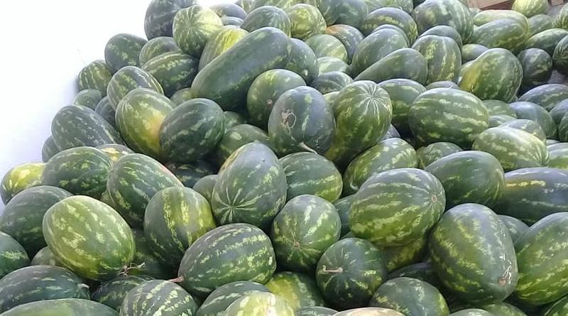 Tunesische Wassermelonen