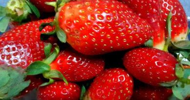 Tunesische Erdbeeren
