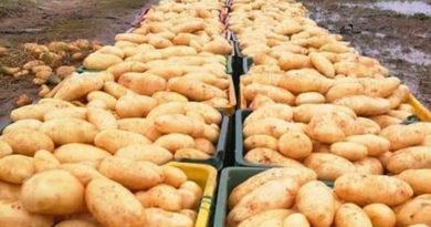 Pufferbestand Kartoffeln