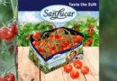 SanLucar setzt verstärkt auf umweltfreundliche Verpackungen und beginnt die tunesische Tomatensaison mit der neuen Tomaten-Naturtüte.