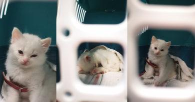 Flughafen DUS: Kranke, ungeimpfte Katze im Handgepäck