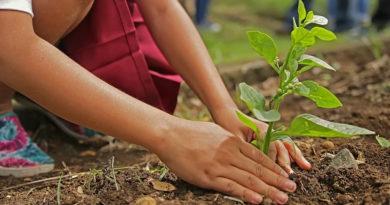 Wiederaufforstung: Zwei Mio neue Bäume nach Bränden